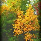 Autumn Gold by Fay270
