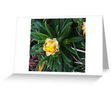 My first close up of Flower... Greeting Card