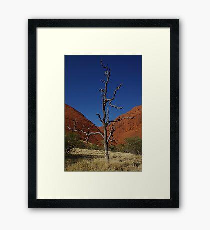Lone Tree - Kata Tjuta Framed Print
