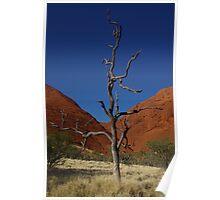 Lone Tree - Kata Tjuta Poster