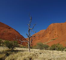 The Olgas & a Lone Tree by Linda Fury