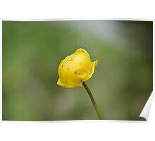 Globeflower Poster