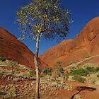 A Little Gum Tree by Linda Fury