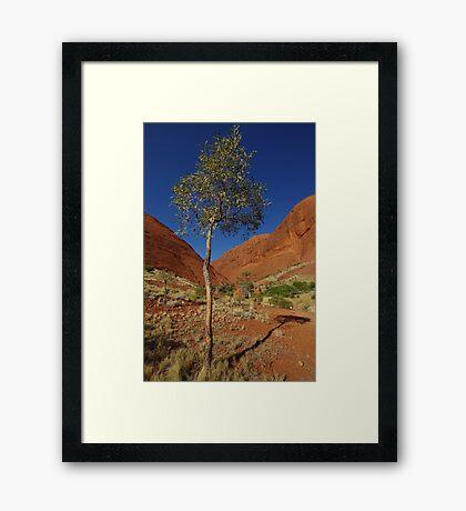 A Little Gum Tree Framed Print