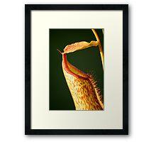 Speckled pitcher Framed Print
