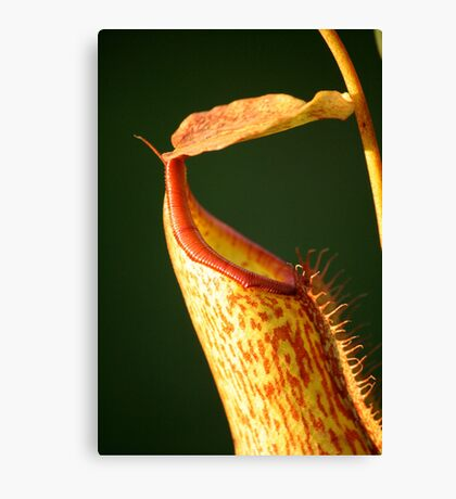 Speckled pitcher Canvas Print