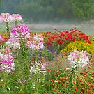 Flowers in the Mist by Marilyn Cornwell