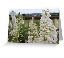 White Delphinium Greeting Card