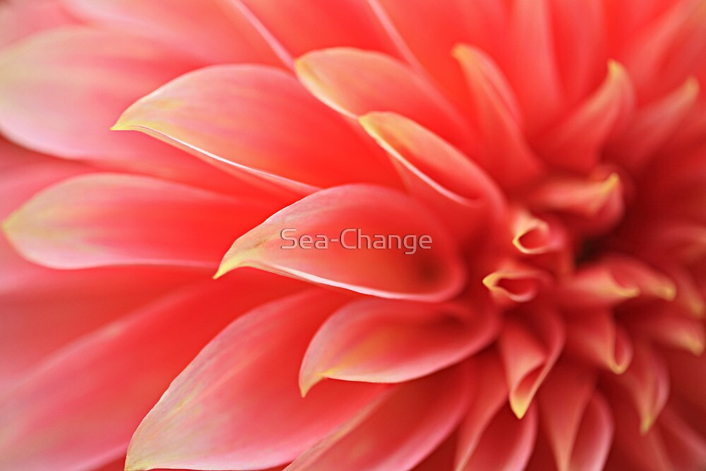 From Auntie's Garden #2 by Sea-Change