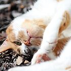 Kit-cat by Daniel Sherwood