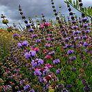 Just For Me ~ Wild Field Mint ~ by Charles & Patricia   Harkins ~ Picture Oregon