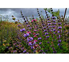 Just For Me ~ Wild Field Mint ~ Photographic Print