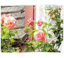 Those Marvelous English Roses Poster