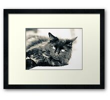 Paper Tiger Framed Print