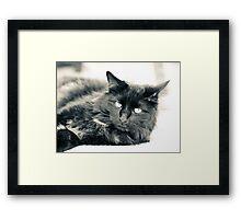Paper Tiger Framed Print