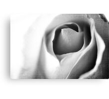 The One Rose  Canvas Print