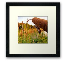 Hello There - Pecan Grove Park, Sherman, Texas, USA Framed Print