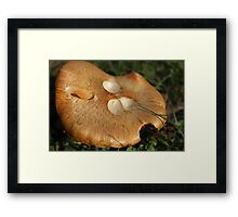 Who has been hungry? Framed Print