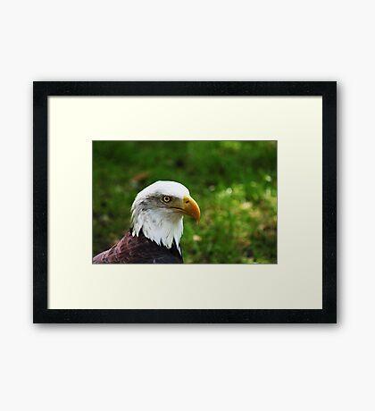 Emblematic  Framed Print