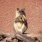 Hungry Monkey by Vulcha