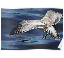 D gull has landed ! Poster