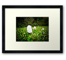 Toad Stools growing in a field Framed Print