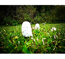 Toad Stools growing in a field Photographic Print