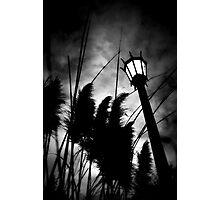 narnia scape Photographic Print
