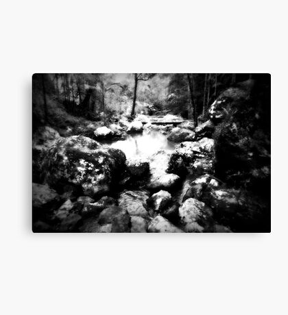 forest primeval in australia Canvas Print