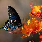 Blue Beauty by rrushton