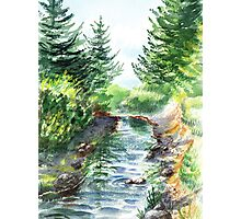 Forest Creek Photographic Print
