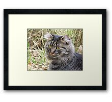 Spook the Maine Coon Framed Print
