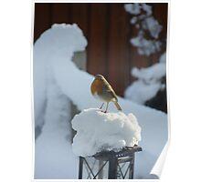 Robin in Winter Poster