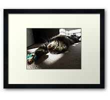 Maine Coon at play Framed Print