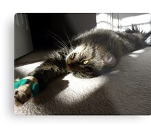 Maine Coon at play Metal Print