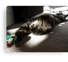 Maine Coon at play Canvas Print