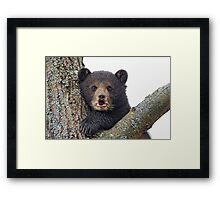 Cub in a tree Framed Print