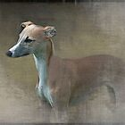 The whippet by almaalice