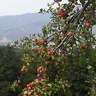 LE MELE  IN MONTAGNA .....località Noveglia / ITALIA/ 1000 VISUalizzazioni 30 giugno 2013- VETRINA RB EXPLORE 30 GIUGNO 2013  --- --- by Guendalyn