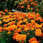 Orange Flowers by George I. Davidson