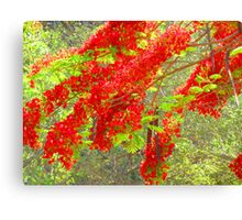 Like fire in the sun - natures artwork Canvas Print