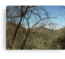 The Oak Tree In The San Bernardino Mountains Canvas Print