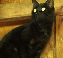 Kitty George by kimbarose