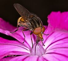 Pollination 5 by Gareth Jones