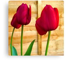 Red Tulips ..  Canvas Print