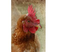 A Happy Chook Photographic Print