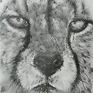 Up Close Cheetah by BarbBarcikKeith