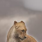 Portrait of a Lioness by Ladymoose