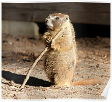 The marmot and the stick Poster