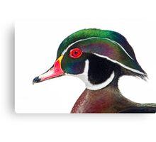 Wood duck portrait Canvas Print